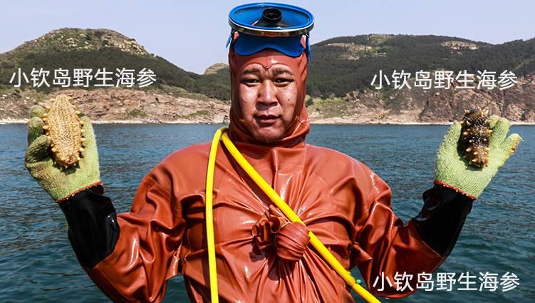 小钦岛野生鲜活海参-吴世伦